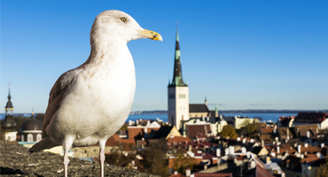 Vogeltrim plaatsen